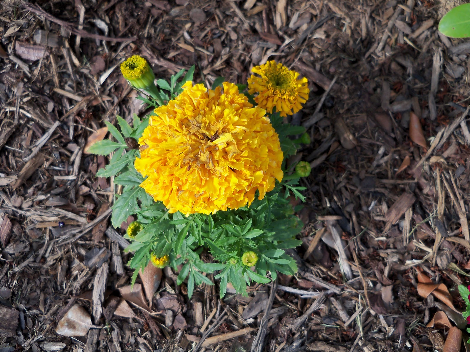 Gardening 2010 - 101_1446.JPG