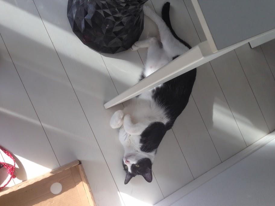 猫 日光浴