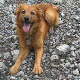 fotos caninas 146.jpg