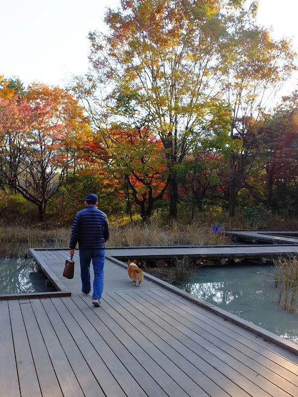mies ja koira