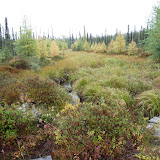 a sedge and Tamarack meadow between Lac Fourchette and the Manicouagan Reservoir