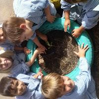P.4. Plantem a l'hort