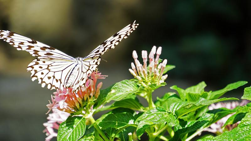 多摩動物公園 蝶 写真3