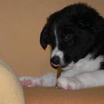 2007 Cucciolata H (7).jpg