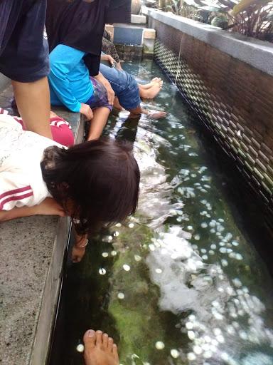Terapi ikan Jejamuran