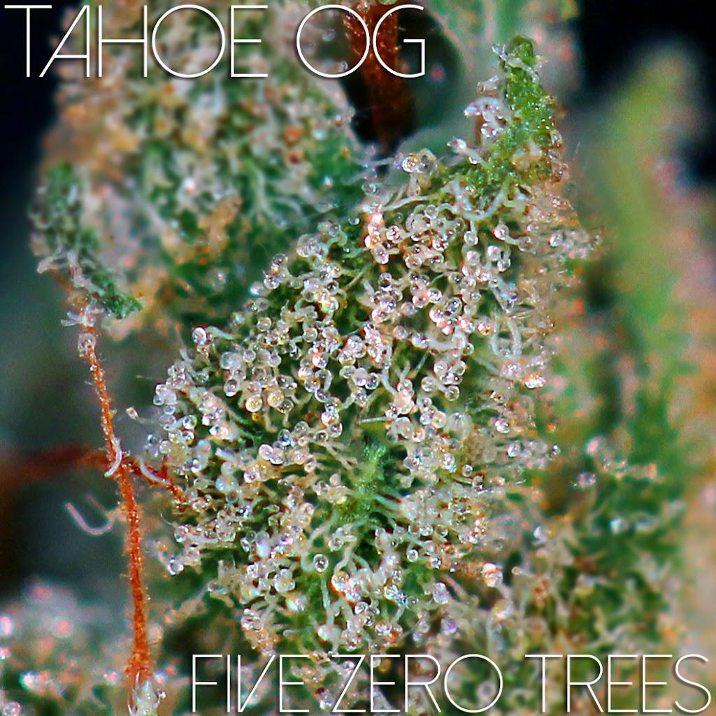 Tahoe OG macro 3