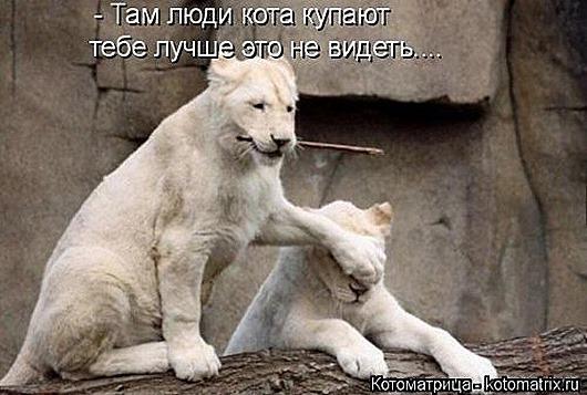 1428677908_kotomatricy-20