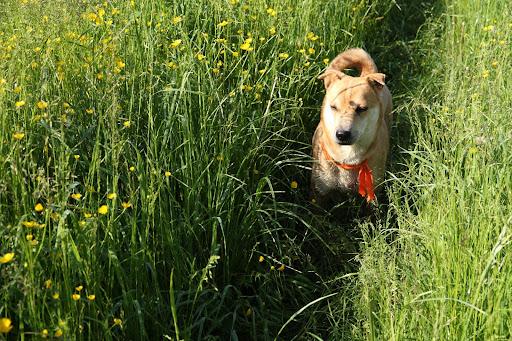 Vysokou trávou k Jasenovej