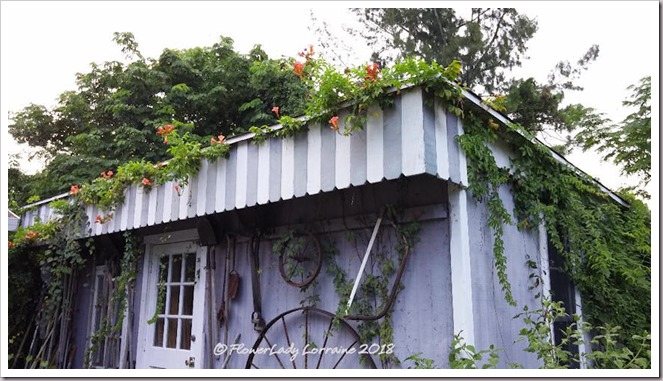 08-20-vine-covered-shed