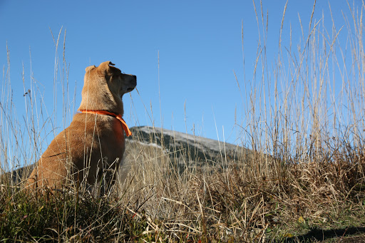 Pohľad na vrchol