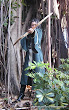 Elf Archer In Forest