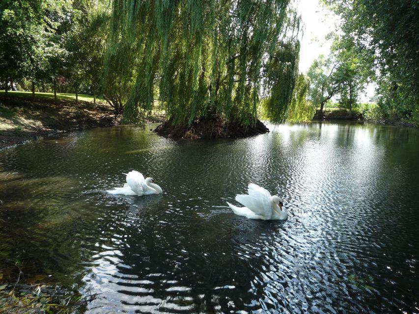 Le parc paysagé - p1000162.jpg