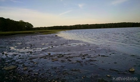 6-14-15 mudflats at maquoit bay