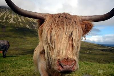 Schottland2015-0393-6355_1920.JPG