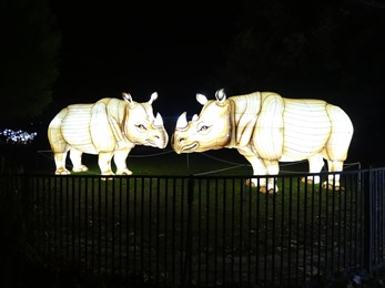 2018.12.03-086 rhinocéros