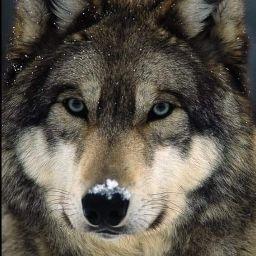 user Vickie Weifenbach apkdeer profile image