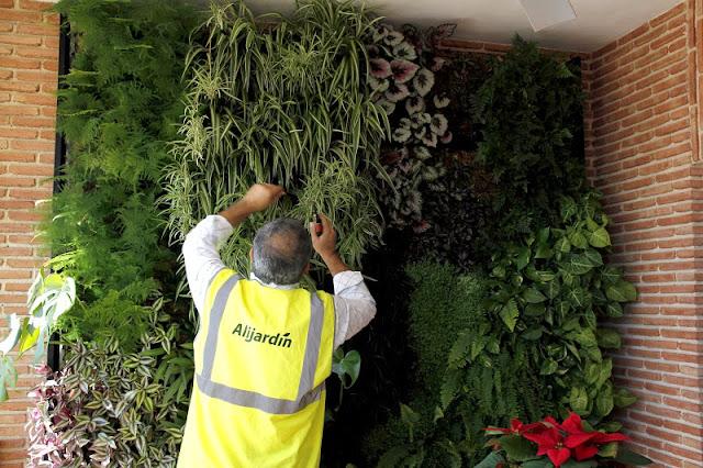 Mantenimiento de jardines verticales urbanarbolismo for Riego jardin vertical