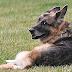 Bidens' Dog, Champ, Dies