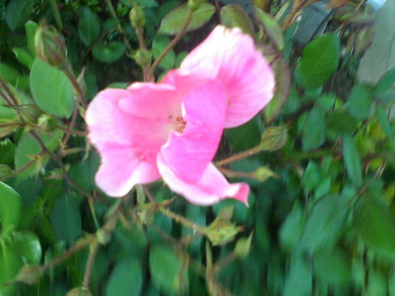 Gardening 2014 - 0411192040.jpg