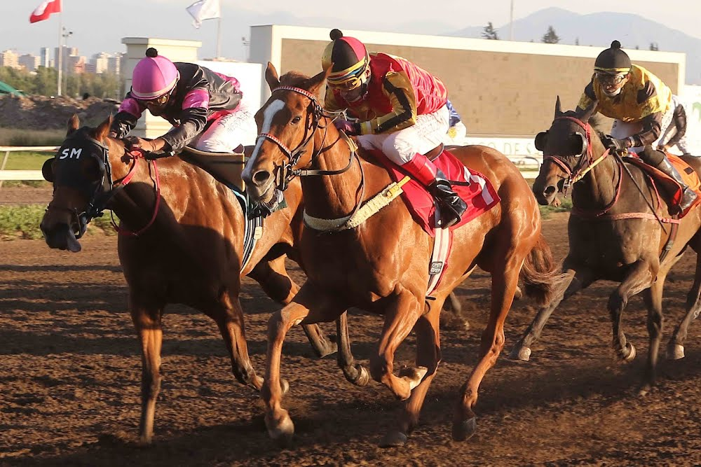 La Curiosa (Buzzword) se lleva Handicap (1000m-Arena-CHS). - Staff ElTurf.com