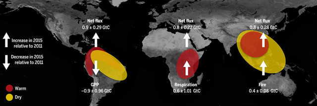 Diverse climate driver anomalies and carbon cycle responses to the 2015–2016 El Niño over the three tropical continents. Schematic of climate anomaly patterns over the three tropical continents and the anomalies of the net carbon flux and its dominant constituent flux (i.e., GPP, respiration, and fire) relative to the 2011 La Niña during the 2015–2016 El Niño. GtC, gigatons C. Graphic: Liu, et al., 2017 / Science