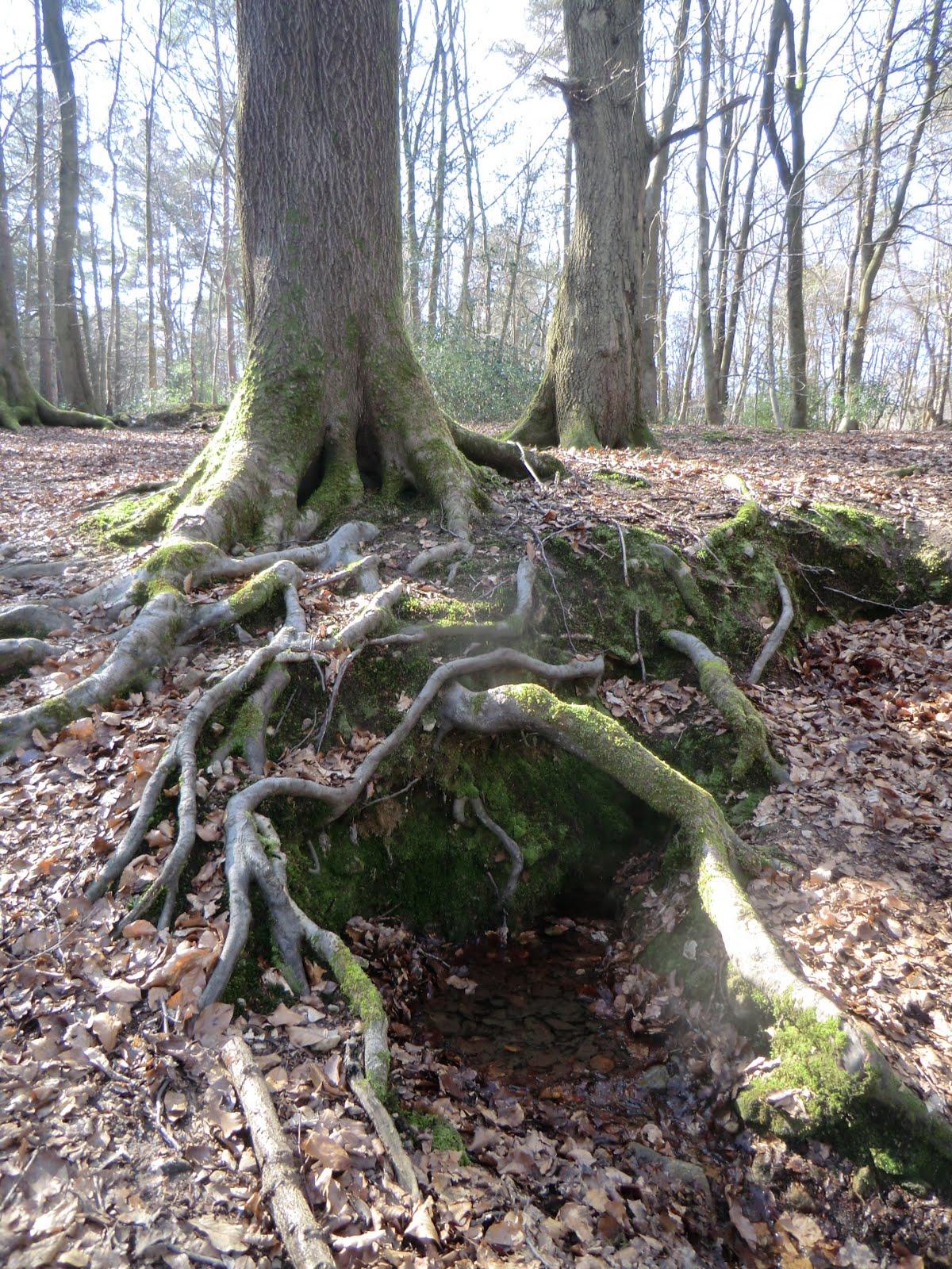 CIMG2871 Yalden spring (source of River Darent)
