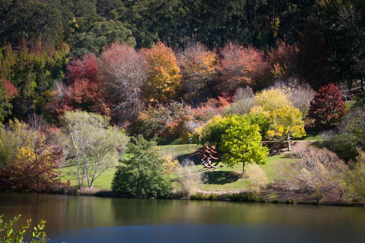 2011 04 25 Mt Lofty Botanic Garden - IMG_6398.jpg
