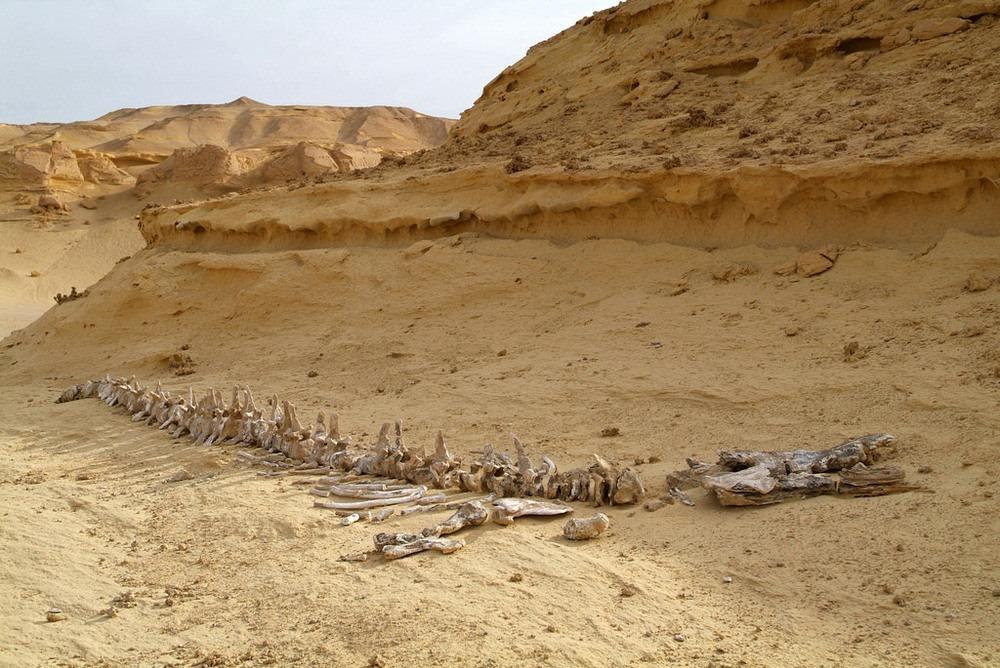 wadi-al-hitan-2
