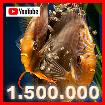über 1 Mio. Aufrufe