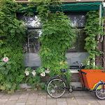20180625_Netherlands_Olia_169.jpg