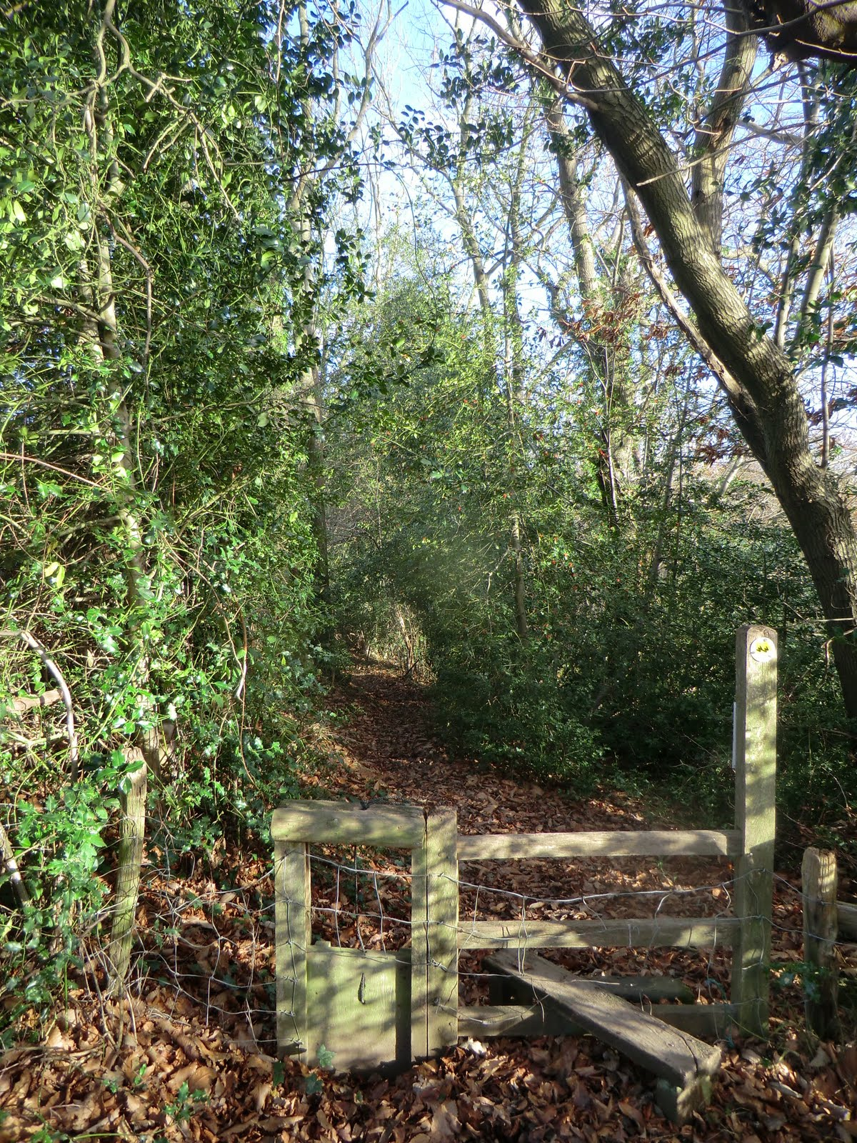 CIMG1815 Into Avery's Wood