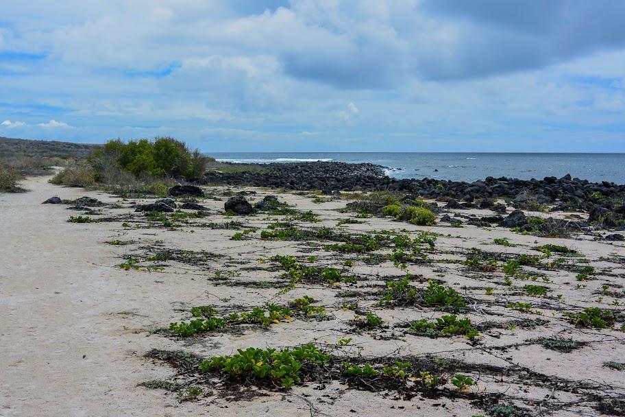 galapagos - Galapagos_FB_2-143.jpg