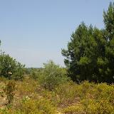 Biotope de Papilio machaon, Iphiclides feisthamelii et Brintesia circe, au Sud de Bages (Pyr. orientales), 26 juin 2010. Photo : J.-M. Gayman