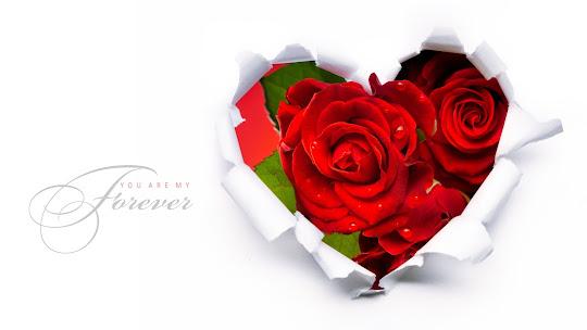 Valentinovo besplatne ljubavne slike čestitke pozadine za desktop 1920x1080 free download Valentines day 14 veljača cvijeće ruže