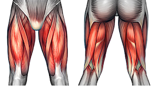Muscle Strains in the Thigh