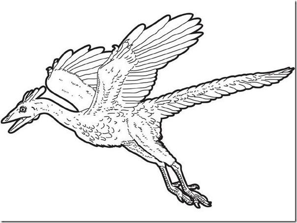 dibujo-para-colorear-arqueopterix-volador_44g