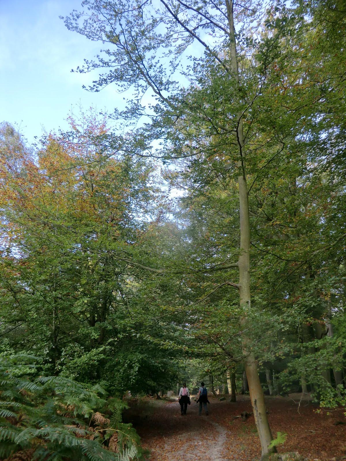 CIMG0663 Broadstone Warren in early autumn