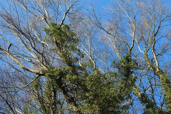 15-trees