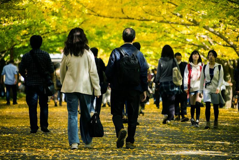 昭和記念公園 カナール イチョウ並木 写真3