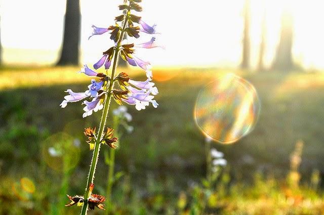 lentemorgen - ANW (Algemeen Nederlands Woordenboek)
