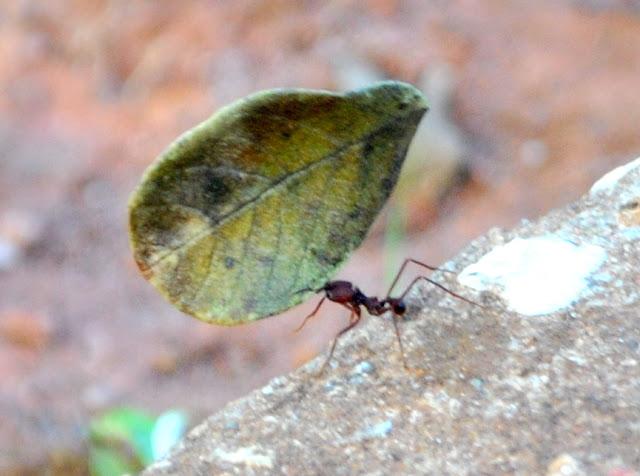 Filosofia da imagem em a folha e a formiga