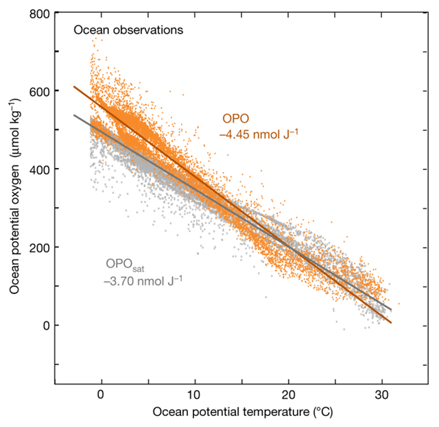 Observed link between potential oxygen and ocean heat. OPO concentrations in situ (OPO, yellow) and at saturation based on O2 and CO2 solubility (OPO sat, grey) as a function of ocean temperature in the GLODAPv2 database. Graphic: Resplandy, et al., 2018 / Nature