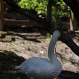 04-07-12 Homosassa Springs State Park - IMGP4515.JPG