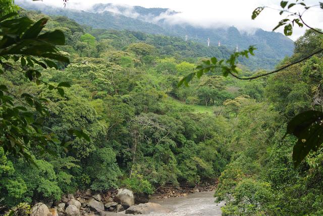Río Cravo Sur, Sendero Ecológico La Virgen de La Peña, El Morro, 640 m (Casanare, Colombie), 6 novembre 2015. Photo : J.-M. Gayman