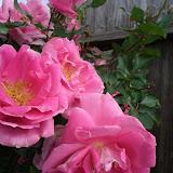 Gardening 2013 - IMG_20130330_094617.jpg