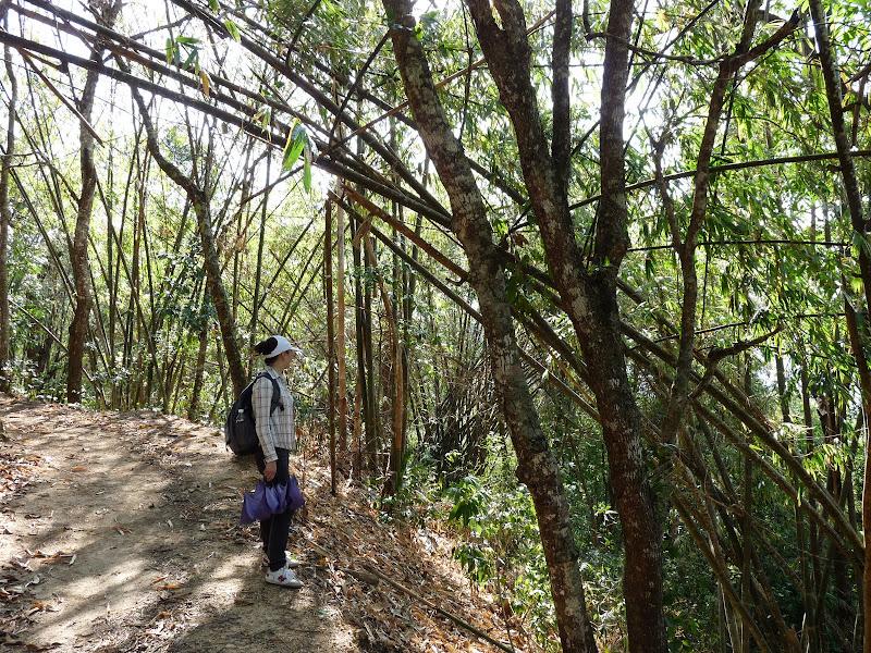 Chine: randonnée xishangbanna, région de Bada - Picture%2B847.jpg