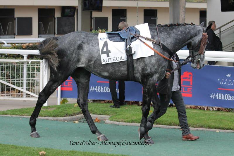 Photos Auteuil 7-11-2015 (48h de l'obstacle) IMG_6365