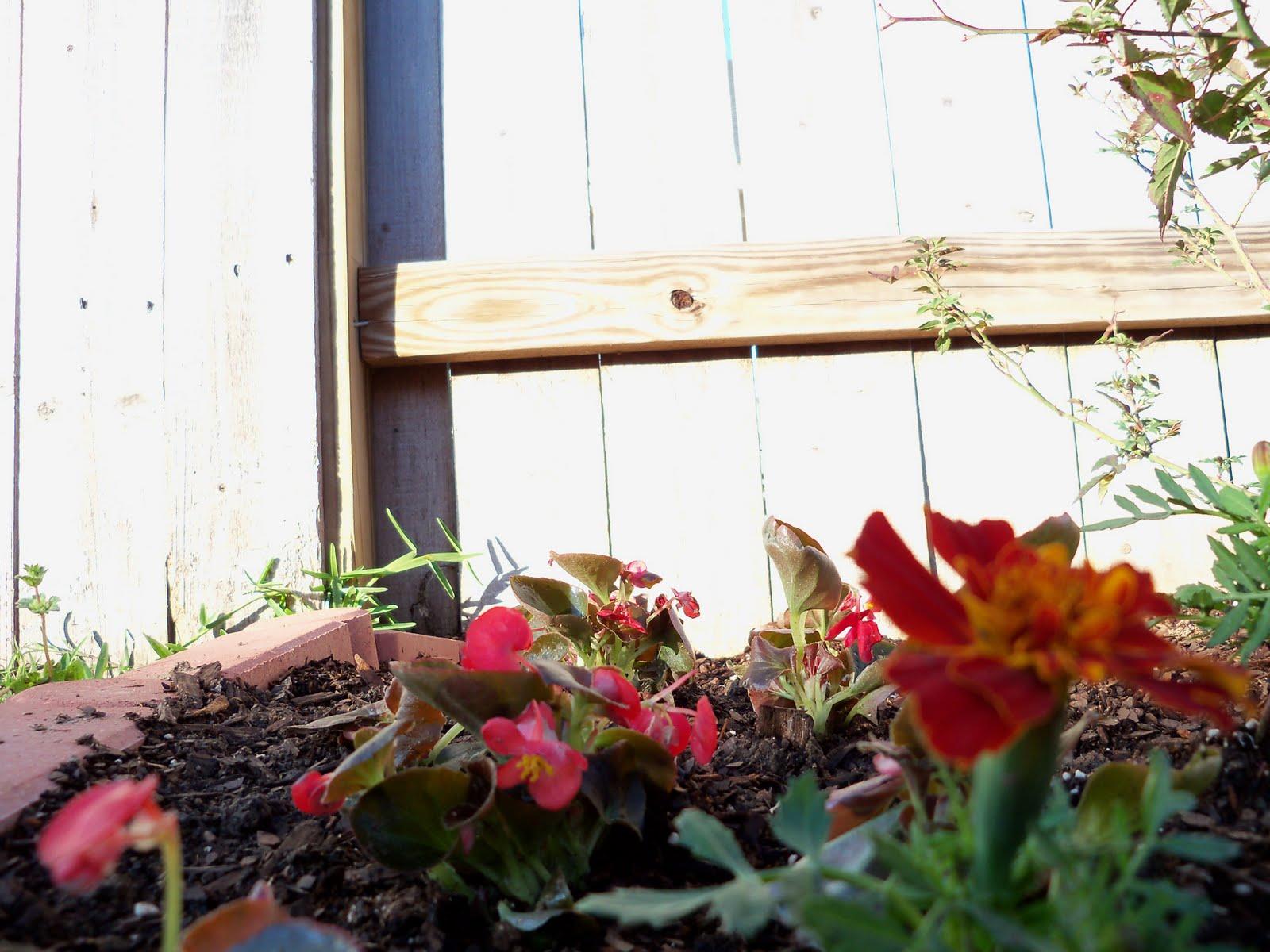 Gardening 2010 - 101_0288.JPG