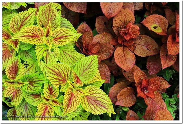 160906_Butchart_Gardens_0075