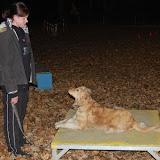 DogCrossingTurnier